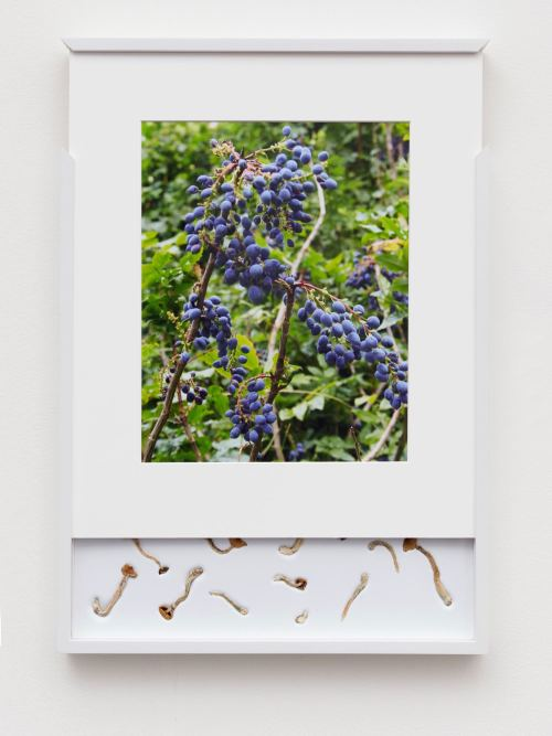 Brad Troemel, Security Sliding Frame and Silk Road Mushrooms (Blueberry), 2016. 24-20 x 17 in, 62-52 x 43 cm